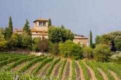 vingårdvinodling Royaltyfri Fotografi