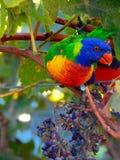 Vingt-huit perroquets Images stock