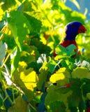 Vingt-huit perroquets Photo libre de droits