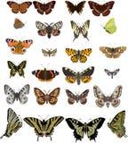 Vingt-quatre guindineaux différents illustration de vecteur