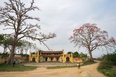 Vinh Phuc, Vietnam - 22 marzo 2017: Tempio con l'albero di ceiba di fioritura del bombax e donna che cicla sulla strada del suolo Immagine Stock