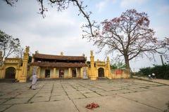 Vinh Phuc, Vietnam - 22 marzo 2017: Tempio con l'albero di ceiba di fioritura del bombax e un'iarda ampia del tempio del monaco f Immagini Stock Libere da Diritti
