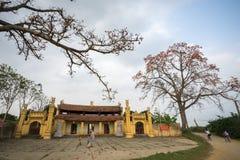 Vinh Phuc, Vietnam - 22 marzo 2017: Tempio con l'albero di ceiba di fioritura del bombax e un'iarda ampia del tempio del monaco f Fotografia Stock