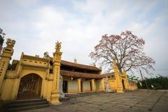 Vinh Phuc, Vietnam - 22 marzo 2017: Tempio con l'albero di ceiba di fioritura del bombax nel distretto di Lap Thach Paesaggio del Immagini Stock