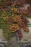 Vinha colorida em Housewall Imagens de Stock Royalty Free