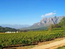 Vinhedo África do Sul da propriedade Fotografia de Stock