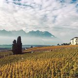 Vinhedo alpino Imagens de Stock Royalty Free