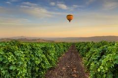 Vinhedo bonito no por do sol com o balão de ar quente no céu Fotografia de Stock