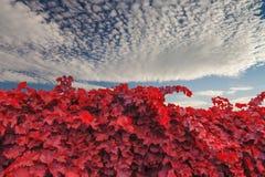 Vinhedo cênico bonito com céu do por do sol Fotos de Stock Royalty Free