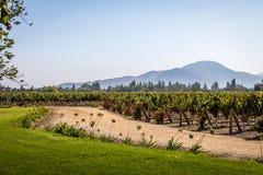 Vinhedo chileno - Santiago, o Chile foto de stock royalty free