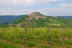 Vinhedo com a cidade do monte de Motovun fotos de stock royalty free