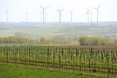 Vinhedo com turbinas eólicas Fotografia de Stock Royalty Free