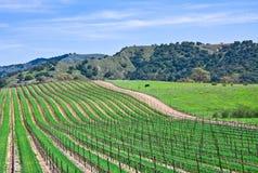 Vinhedo de Califórnia Imagens de Stock Royalty Free