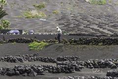 Vinhedo de Geria do La de Lanzarote no solo vulcânico preto Fotografia de Stock Royalty Free