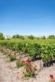 Vinhedo de Margaux, na área de Medoc, perto do Bordéus em França Foto de Stock Royalty Free