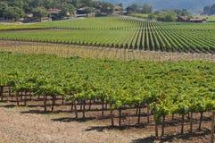 Vinhedo de Napa Valley fotografia de stock royalty free