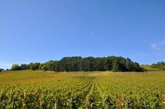 Vinhedo de Parma, França Fotografia de Stock