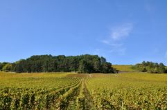 Vinhedo de Parma, França Fotos de Stock Royalty Free