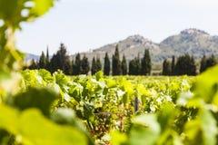 Vinhedo de Provence imagem de stock royalty free