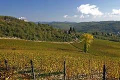 Vinhedo de Tuscan Imagem de Stock