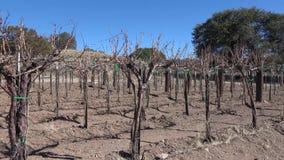 Vinhedo do nanômetro das vinhas do inverno filme