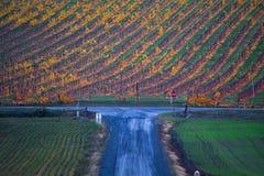 Vinhedo do outono, estrada azul imagens de stock