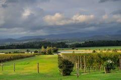Vinhedo do vale de Yarra no dia nebuloso Imagem de Stock Royalty Free