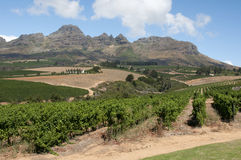 Vinhedo e montanha no cabo ocidental S África fotografia de stock