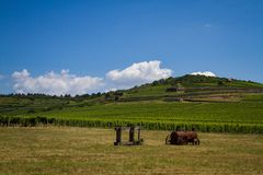 Vinhedo e montes, Tokaj - um local do patrimônio mundial do Unesco imagem de stock royalty free
