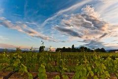 Vinhedo e nuvens Fotos de Stock