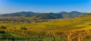 Vinhedo e townscape Kaysersberg, Alsácia em França Fotos de Stock