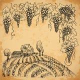 Vinhedo e uva do vintage no fundo de papel envelhecido Elementos isolados ilustração royalty free