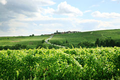Vinhedo e vila pequena em Alsácia - France fotografia de stock royalty free