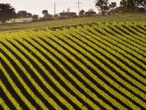 Vinhedo em Adelaide Hills Fotos de Stock Royalty Free