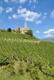 Vinhedo em Kurtatsch, Tirol sul, Trentino, Itália fotografia de stock royalty free
