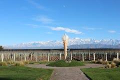 Vinhedo em Mendoza, fundo de Aconcagua Fotografia de Stock