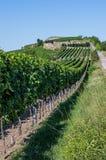 Vinhedo em Rhineland Palatinate Foto de Stock