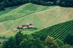 Vinhedo em Styria fotos de stock
