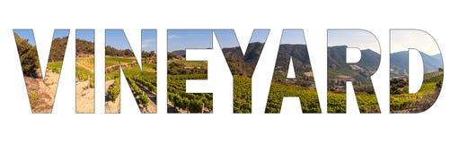 VINHEDO escrito com fundo um vinhedo montanhoso de Sardinia, Itália fotos de stock