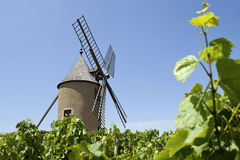 Vinhedo, Moulin um respiradouro, de France. Foto de Stock Royalty Free