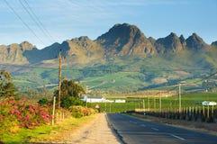 Vinhedo na adega de Stellenbosch com montanhas Imagem de Stock