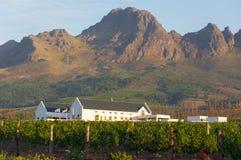 Vinhedo na adega de Stellenbosch com montanhas Foto de Stock