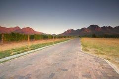 Vinhedo na adega de Stellenbosch com montanhas Foto de Stock Royalty Free