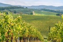 Vinhedo na região do Chianti na província de Siena toscânia Italy imagem de stock