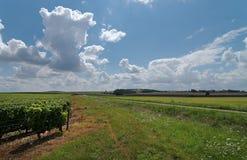 Vinhedo no Loire Valley imagem de stock