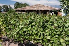 Vinhedo no vale o Chile de Colchagua Fotos de Stock