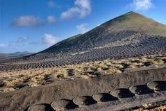 Vinhedo no vulcão Foto de Stock