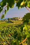 Vinhedo nos montes de Toscane Fotografia de Stock