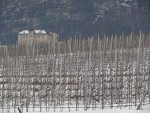 Vinhedo nos montes de Trentino fotografia de stock royalty free