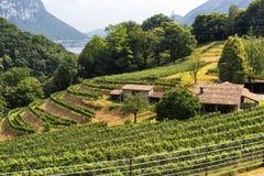 Vinhedo perto de Arogno Ticino, Suíça fotos de stock royalty free